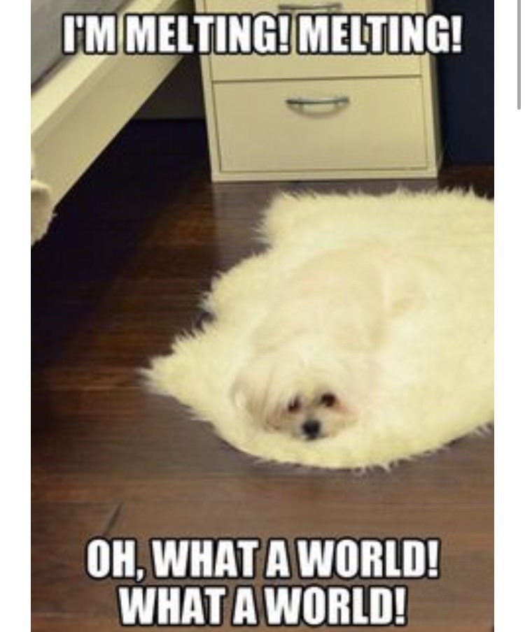 Dog - I'M MELTING! MELTING! OH, WHAT A WORLD! WHAT A WORLD!
