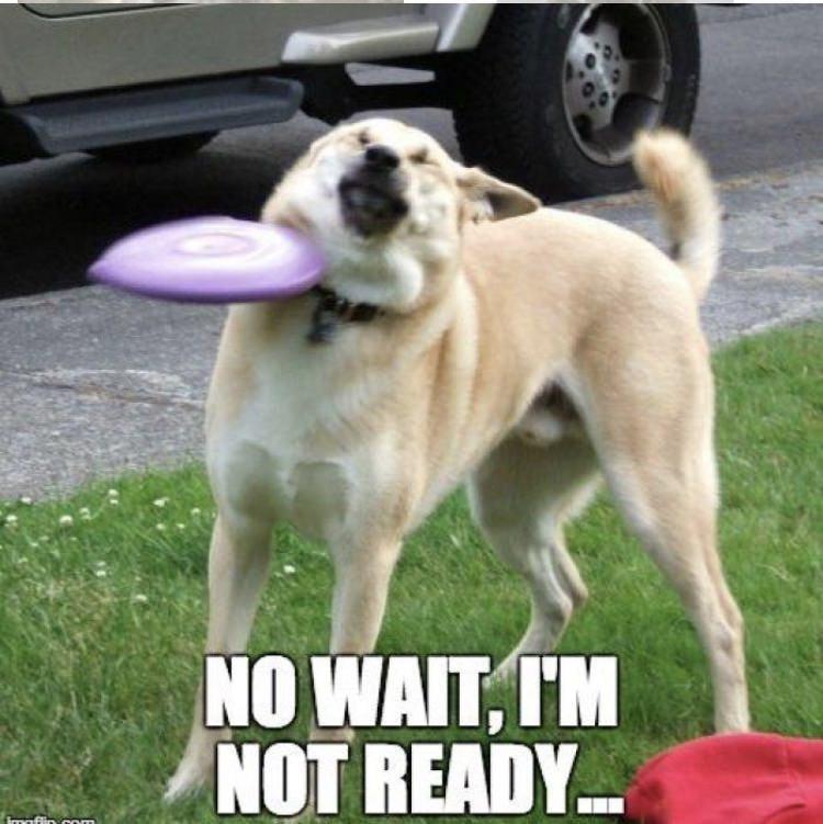 Dog - NO WAIT, I'M NOT READY. frrasflin com
