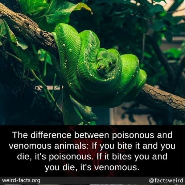 Photograph - The difference between poisonous and venomous animals: If you bite it and you die, it's poisonous. If it bites you and you die, it's venomous. weird-facts.org @factsweird