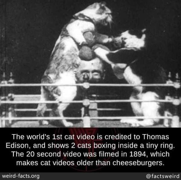 Organism - The world's 1st cat video is credited to Thomas Edison, and shows 2 cats boxing inside a tiny ring. The 20 second video was filmed in 1894, which makes cat videos older than cheeseburgers. weird-facts.org @factsweird
