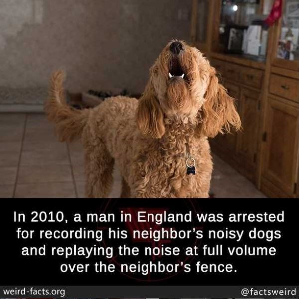 Dog - In 2010, a man in England was arrested for recording his neighbor's noisy dogs and replaying the noise at full volume over the neighbor's fence. weird-facts.org @factsweird