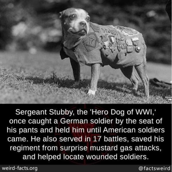 Nature - Sergeant Stubby, the 'Hero Dog of WWI,' once caught a German soldier by the seat of his pants and held him until American soldiers came. He also served in 17 battles, saved his regiment from surprise mustard gas attacks, and helped locate wounded soldiers. weird-facts.org @factsweird