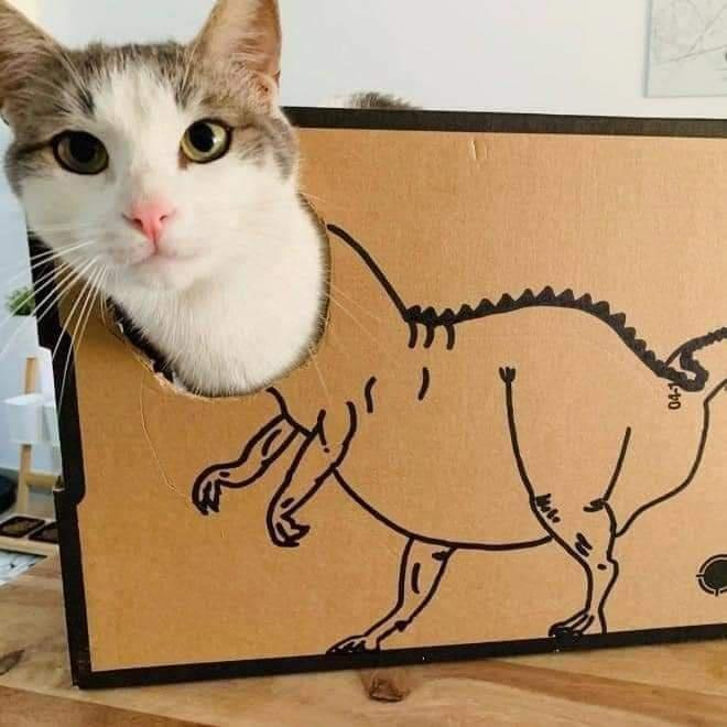 Cat - 045