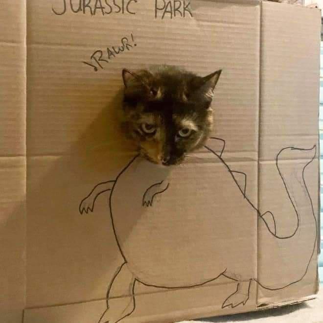 Cat - URASSIC PARK RAWR!