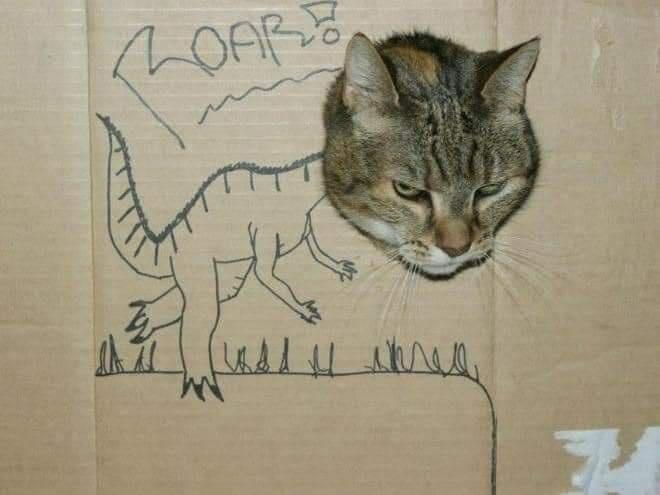 Cat - hOARE