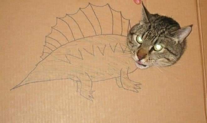 Cat - wANN