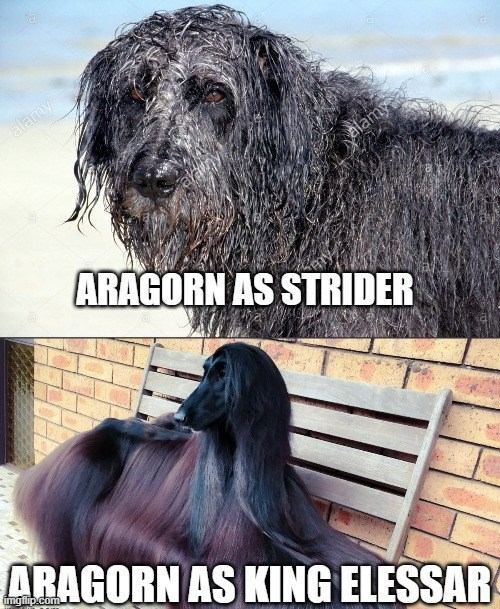 Dog - alamy alay alamy ARAGORN AS STRIDER ARAGORN AS KING ELESSAR imgfilip.com