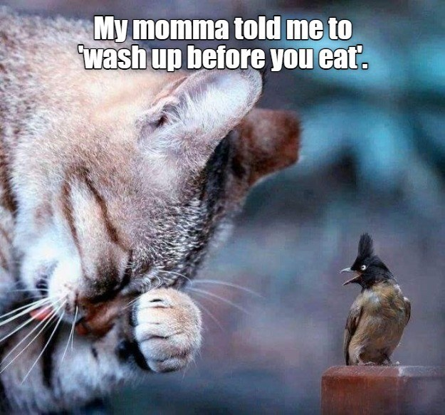 Cat - My momma told me to wash up before you eat.