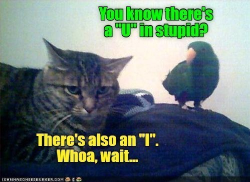 """Cat - You know there's a """"Uinstupid? There's also an """"I"""". Whoa, wait. ICANHASCHEEZBURGER.COM E"""