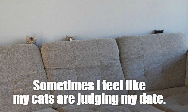 Couch - Sometimes I feel like my cats are judging my date.