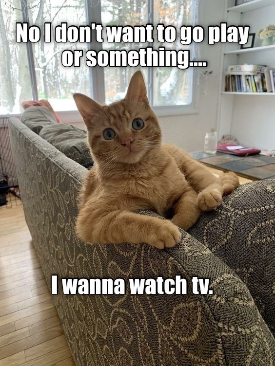 Cat - No Idon't want to go play or something. I wanna watch tv.