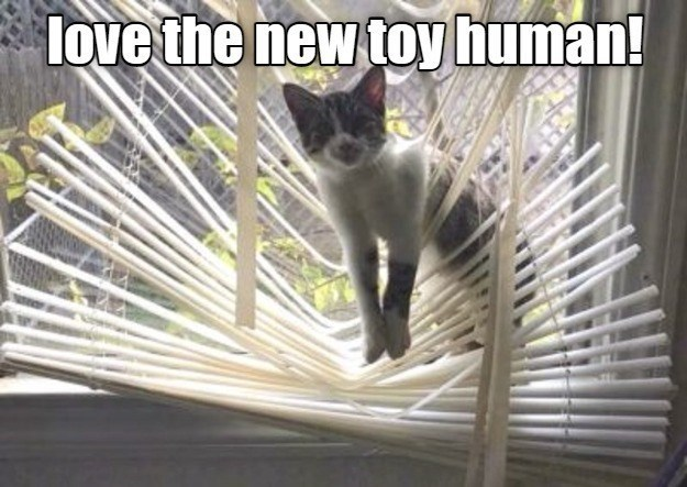 Cat - love the new toy human!