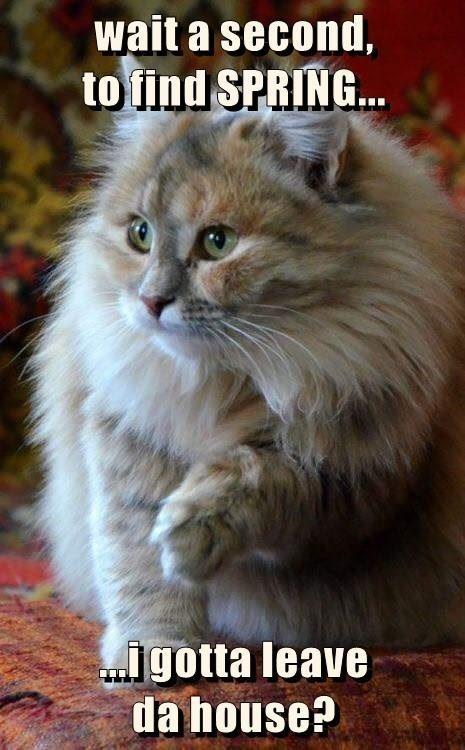 Cat - wait a second, to find SPRING. ..i gotta leave da house?