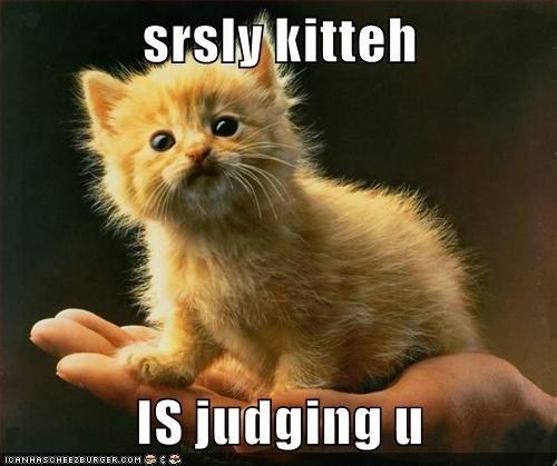 Cat - srsly kitteh Is judging u ICANHASCHEEZBURGER.COM E