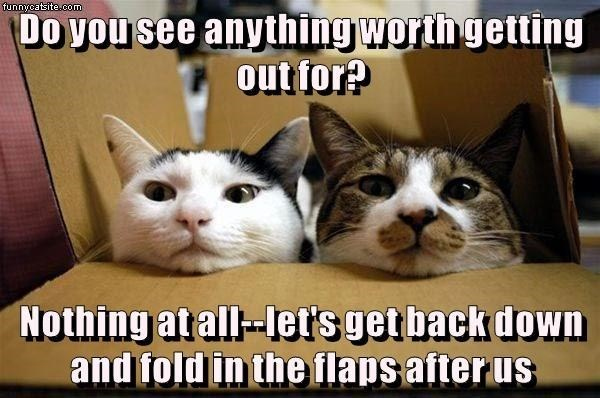 Cat - funnycatsite.com Do you see anything worth getting out for? Nothing at all-Iet's get back down and fold in the flaps after us