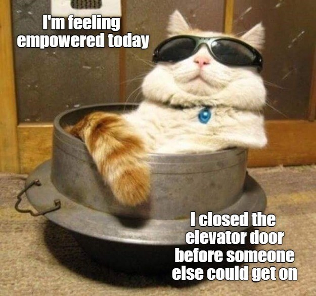 Cat - I'm feeling empowered today I losed the elevator door before someone else could get on
