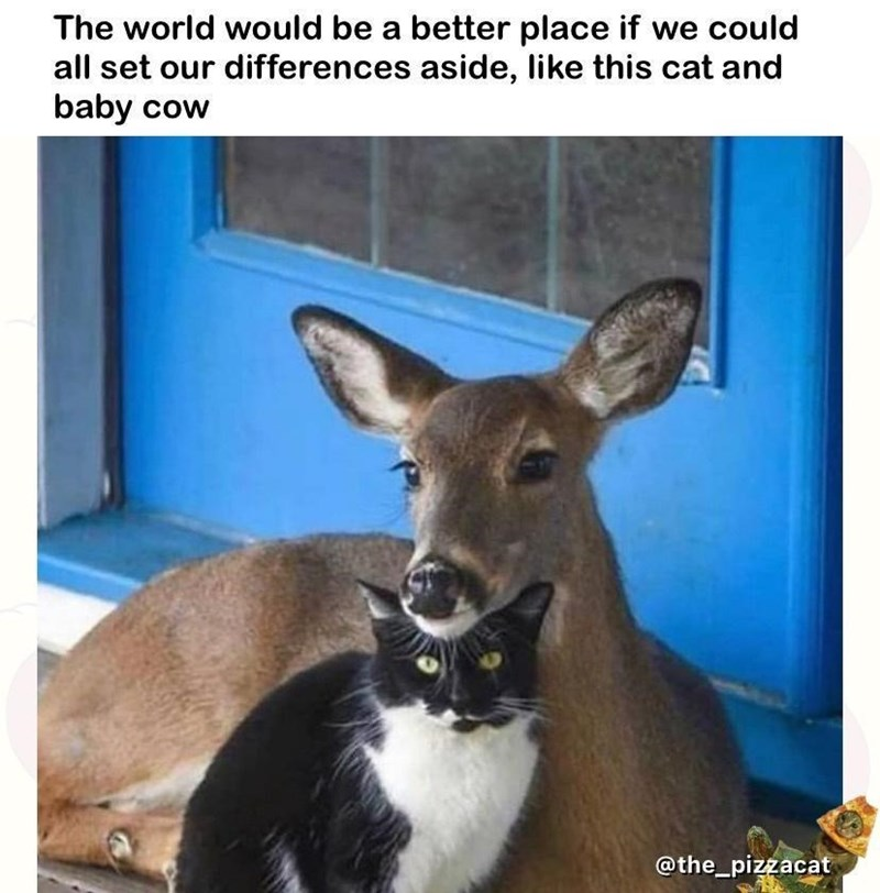 Photograph - The world would be a better place if we could all set our differences aside, like this cat and baby cow @the_pizzacat