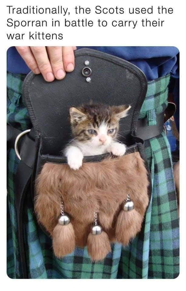 Cat - Traditionally, the Scots used the Sporran in battle to carry their war kittens
