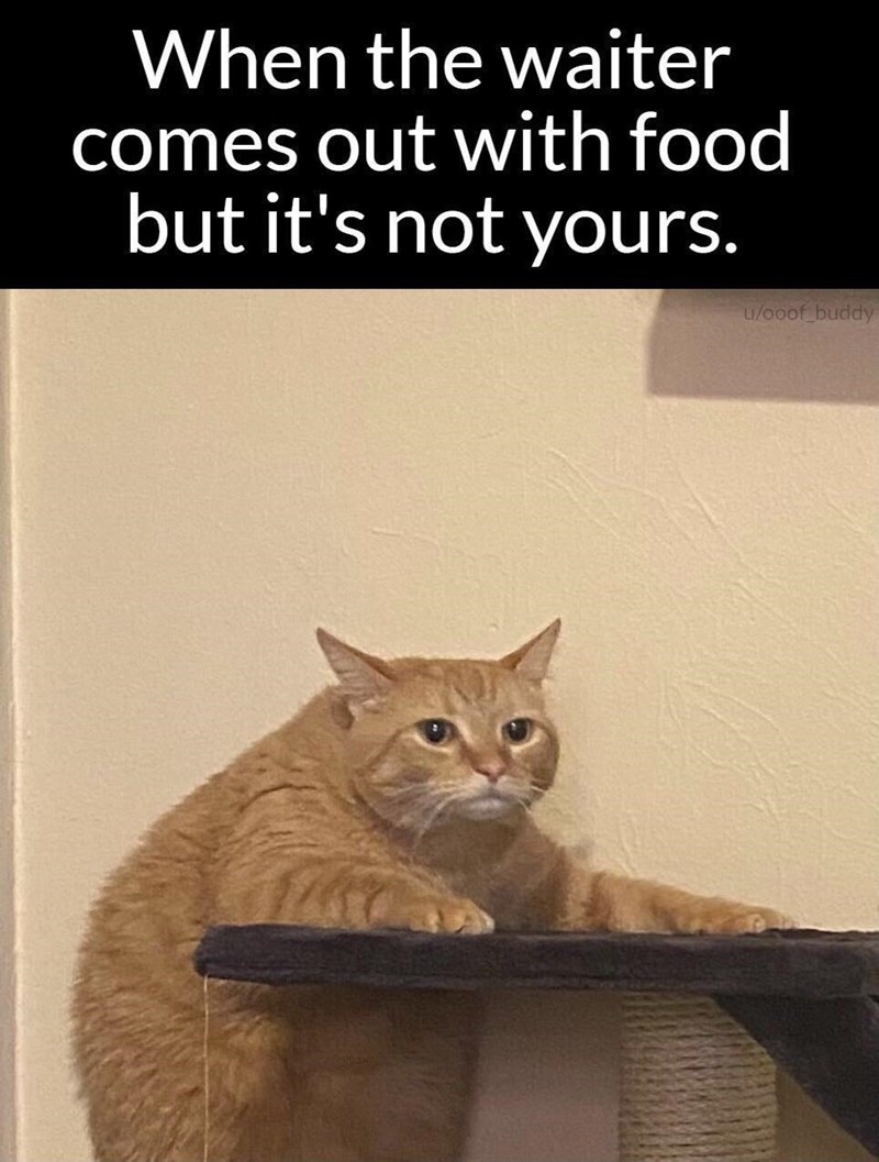 Cat - When the waiter comes out with food but it's not yours. u/0oof buddy