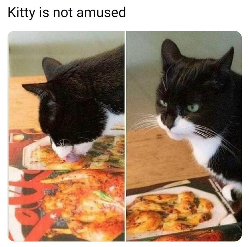 Cat - Kitty is not amused