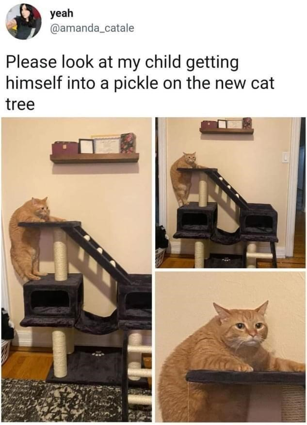 Cat - yeah @amanda_catale Please look at my child getting himself into a pickle on the new cat tree