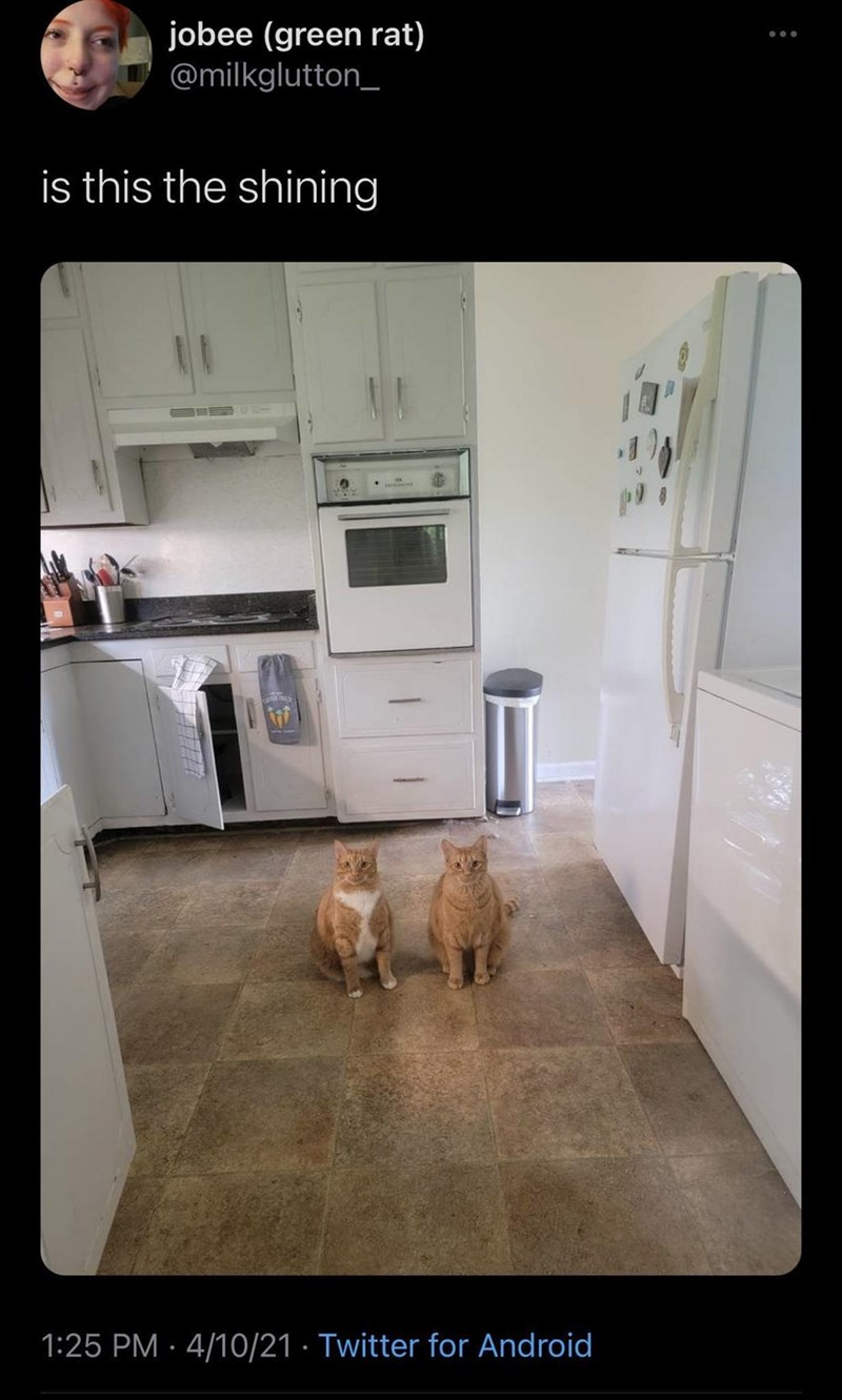 Dog - jobee (green rat) @milkglutton_ is this the shining 1:25 PM · 4/10/21 · Twitter for Android