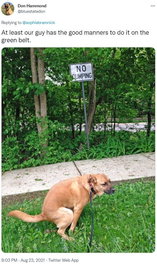 Dog - Don Hammond ... @bluestatedon Replying to @sophiebramnick At least our guy has the good manners to do it on the green belt. NO OUMPING 9:03 PM - Aug 23, 2021 - Twitter Web App