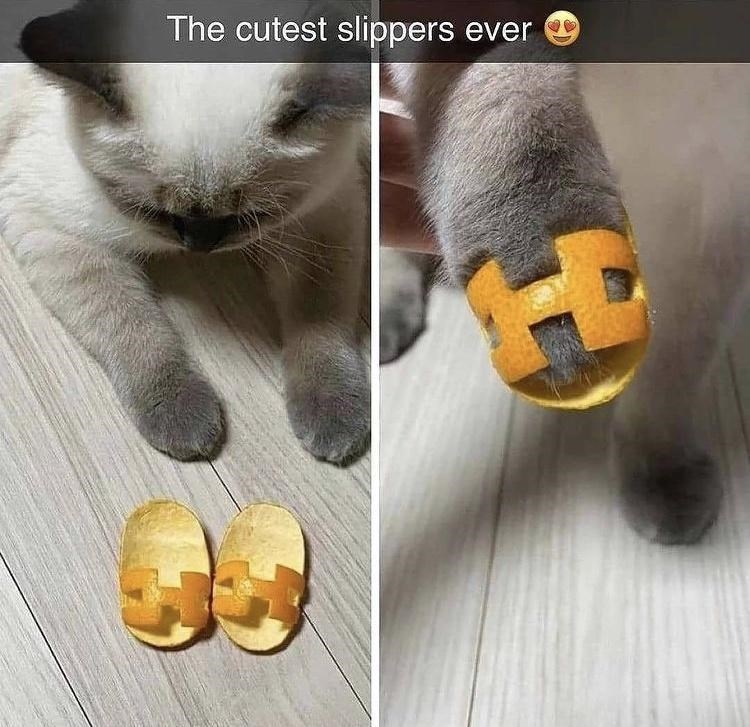 Nose - The cutest slippers ever