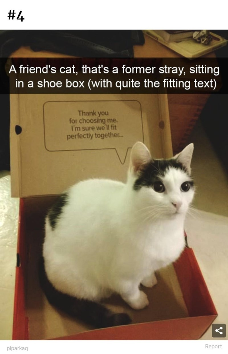 Cat - #4 A friend's cat, that's a former stray, sitting in a shoe box (with quite the fitting text) Thank you for choosing me. I'm sure we ll fit perfectly together. piparkaq Report