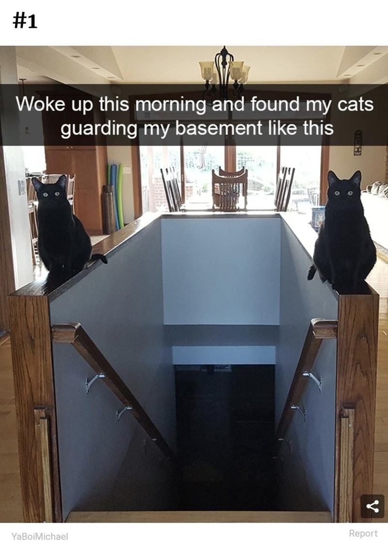 Black - #1 Woke up this morning and found my cats guarding my basement like this YaBoiMichael Report