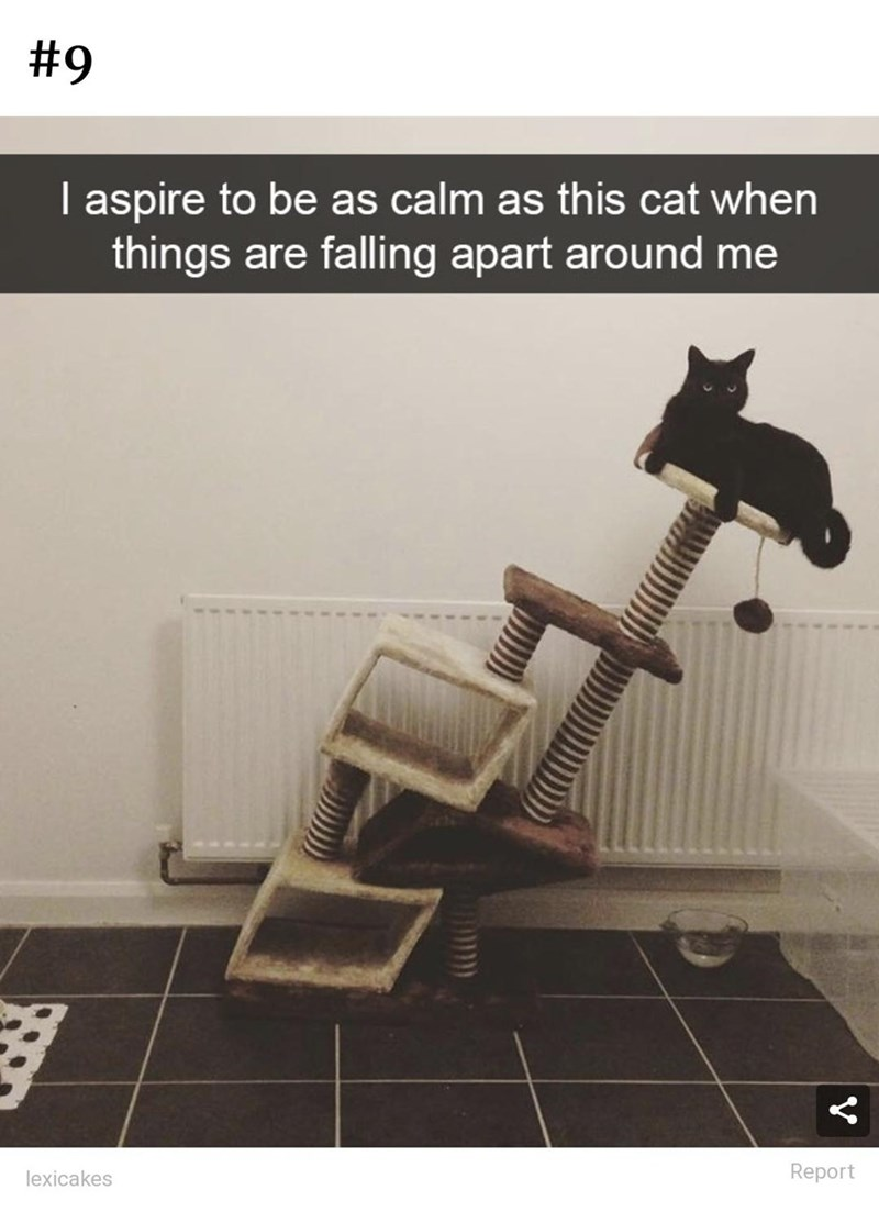Product - #9   aspire to be as calm as this cat when things are falling apart around me lexicakes Report