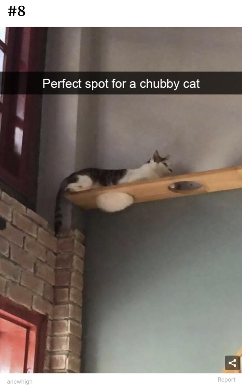 Wood - #8 Perfect spot for a chubby cat anewhigh Report