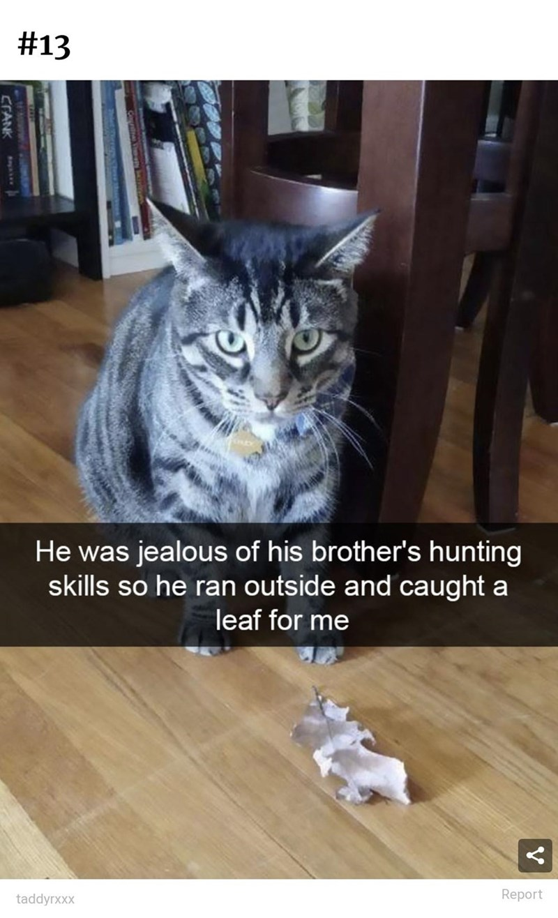 Cat - #13 He was jealous of his brother's hunting skills so he ran outside and caught a leaf for me taddyrxxx Report CFANK