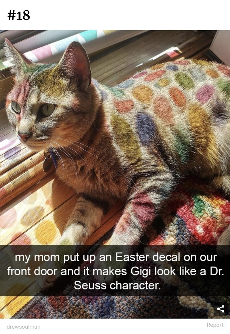 Cat - #18 my mom put up an Easter decal on our front door and it makes Gigi look like a Dr. Seuss character. drewsoulman Report