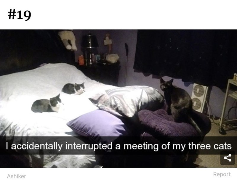 Furniture - #19 I accidentally interrupted a meeting of my three cats Ashiker Report