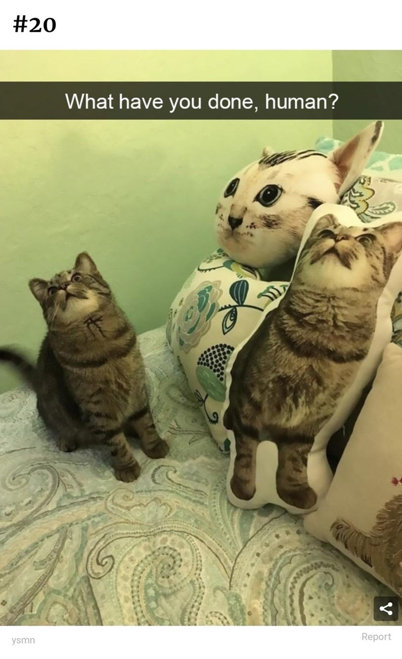 Cat - #20 What have you done, human? Report ysmn