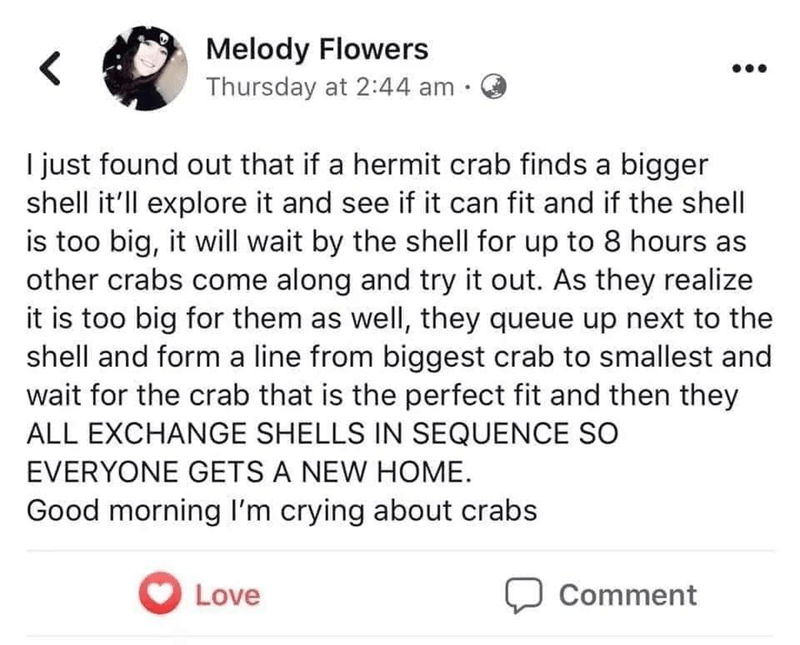 Font - Melody Flowers Thursday at 2:44 am · I just found out that if a hermit crab finds a bigger shell it'll explore it and see if it can fit and if the shell is too big, it will wait by the shell for up to 8 hours as other crabs come along and try it out. As they realize it is too big for them as well, they queue up next to the shell and form a line from biggest crab to smallest and wait for the crab that is the perfect fit and then they ALL EXCHANGE SHELLS IN SEQUENCE SO EVERYONE GETS A NEW H