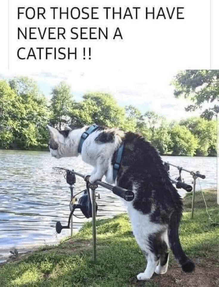 Water - FOR THOSE THAT HAVE NEVER SEENA CATFISH !!