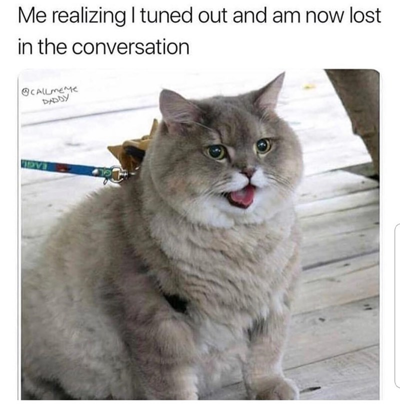 Cat - Me realizing I tuned out and am now lost in the conversation CALLMEME DADDY EAGL