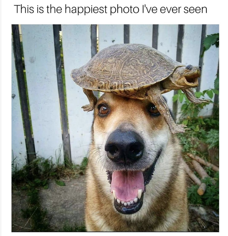 Dog - This is the happiest photo l've ever seen