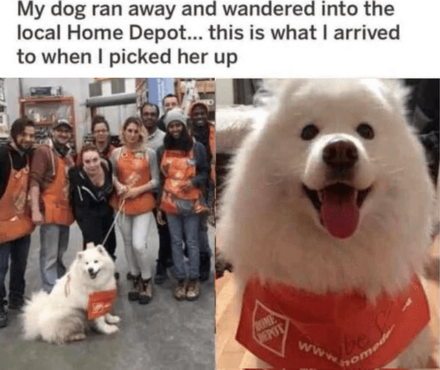 Jeans - My dog ran away and wandered into the local Home Depot... this is what I arrived to when I picked her up UUME VEPOT www. home