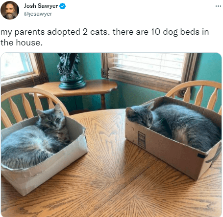 Cat - Josh Sawyer i @jesawyer my parents adopted 2 cats. there are 10 dog beds in the house.