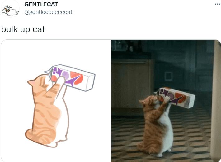 Cat - GENTLECAT @gentleeeeeeecat bulk up cat