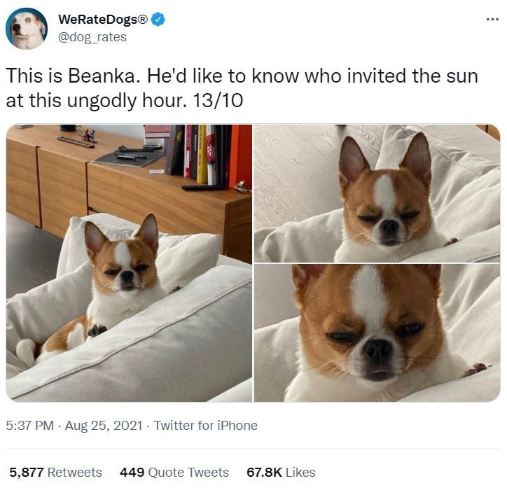 Dog - WeRateDogs®O ... @dog_rates This is Beanka. He'd like to know who invited the sun at this ungodly hour. 13/10 5:37 PM · Aug 25, 2021 · Twitter for iPhone 5,877 Retweets 449 Quote Tweets 67.8K Likes