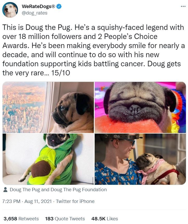 Photograph - WeRateDogs® ... @dog_rates This is Doug the Pug. He's a squishy-faced legend with over 18 million followers and 2 People's Choice Awards. He's been making everybody smile for nearly a decade, and will continue to do so with his new foundation supporting kids battling cancer. Doug gets the very rare... 15/10 2 Doug The Pug and Doug The Pug Foundation 7:23 PM - Aug 11, 2021 - Twitter for iPhone 3,658 Retweets 183 Quote Tweets 48.5K Likes