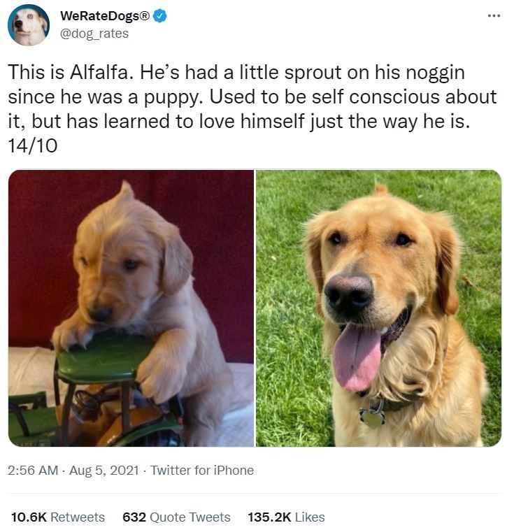 Dog - WeRateDogs® @dog_rates ... This is Alfalfa. He's had a little sprout on his noggin since he was a puppy. Used to be self conscious about it, but has learned to love himself just the way he is. 14/10 2:56 AM - Aug 5, 2021 · Twitter for iPhone 10.6K Retweets 632 Quote Tweets 135.2K Likes