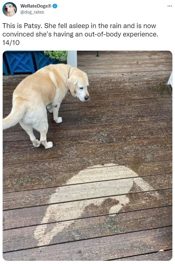 Dog - WeRateDogs® @dog_rates ... This is Patsy. She fell asleep in the rain and is now convinced she's having an out-of-body experience. 14/10