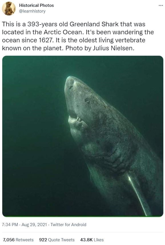 Water - Historical Photos ... @learnhistory This is a 393-years old Greenland Shark that was located in the Arctic Ocean. It's been wandering the ocean since 1627. It is the oldest living vertebrate known on the planet. Photo by Julius Nielsen. 7:34 PM - Aug 29, 2021 - Twitter for Android 7,056 Retweets 922 Quote Tweets 43.8K Likes