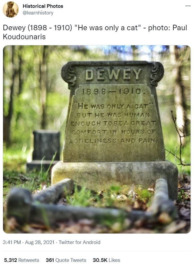 """Plant - Historical Photos ... @learnhistory Dewey (1898 - 1910) """"He was only a cat"""" - photo: Paul Koudounaris DEWEY 1898 1910. HE WAS ONLY A CAT BUT HE WAS HUMAN ENOUGH TOBEA GREAT GOMFORT IN HOURS OF LONELINESS AND PAIN, 3:41 PM · Aug 28, 2021 · Twitter for Android 5,312 Retweets 361 Quote Tweets 30.5K Likes"""