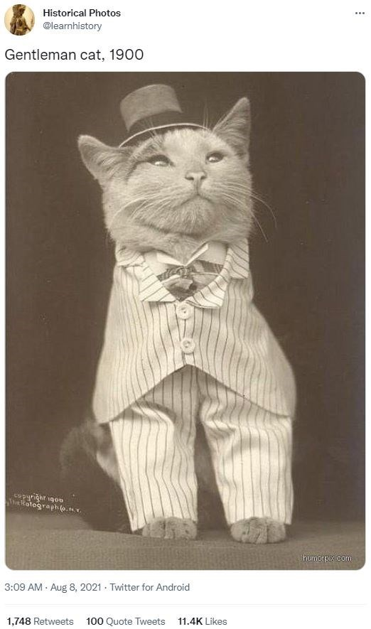 Cat - Historical Photos ... @learmhistory Gentleman cat, 1900 opyrighr 1go0 akatograph (a.nr hurnorpix.com 3:09 AM · Aug 8, 2021 · Twitter for Android 1,748 Retweets 100 Quote Tweets 11.4K Likes